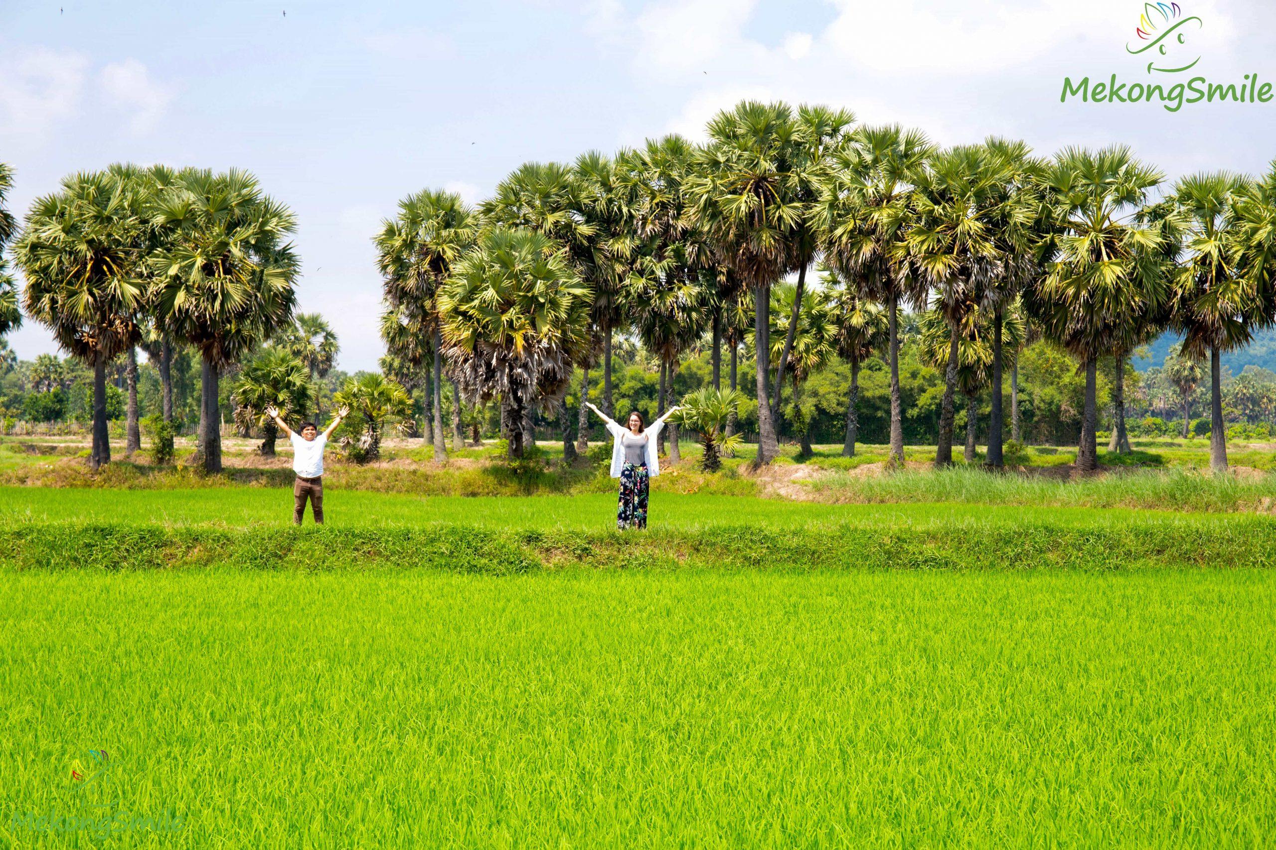 Cánh đồng thốt nốt An Giang - tour Châu Đốc 1 ngày