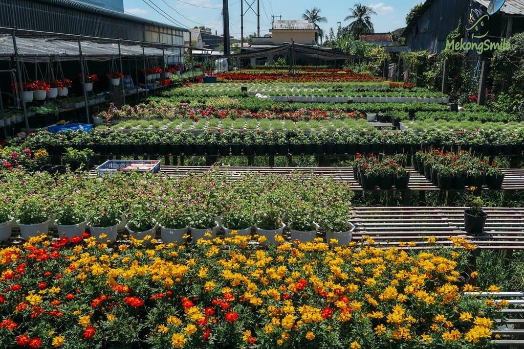 Một vườn hoa của Làng hoa Sa Đéc